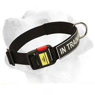 Extra Durable Nylon Collar With ID Patches With Easy Release Buckle