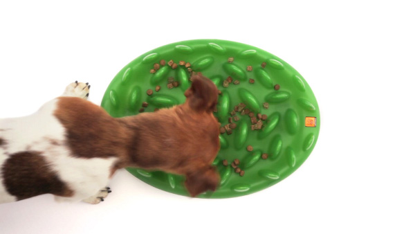 Firm Interective Dog Feeder