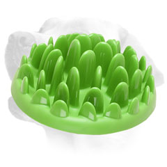 Non-Toxic Plastic Labrador Feeder For Slow Eating
