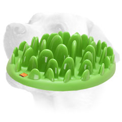 Plastic Labrador Feeder For Slow Eating