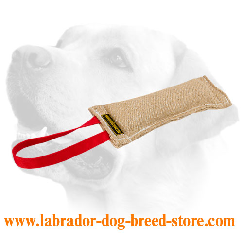 Labrador training tug for puppies