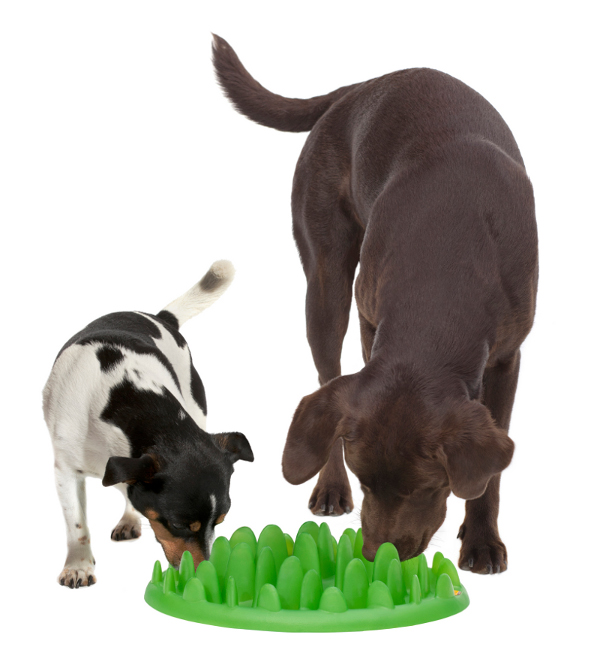 Without Unpleasant Smell Plastic Dog Feeder With Two Dogs Eating
