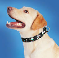LAbrador Leather Dog Collar & Silver Plated Circles Blue Stones