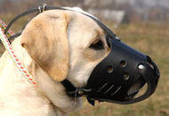 Everyday Labrador Leather dog muzzle