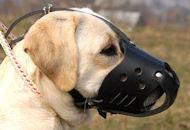 Everyday Labrador Leather dog muzzle