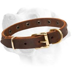 Brass Buckle On Brown Leather Labrador Collar  Walking