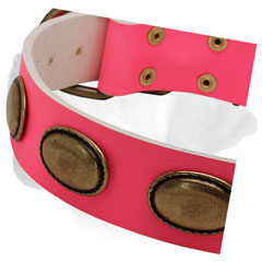 Brass Plates on Walking Pink Leather Labrador Collar