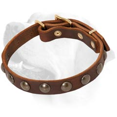 Brass Studs On Brown Leather Labrador Collar  Training