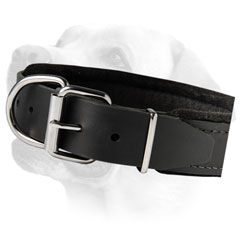 Nickel Buckle On Training Leather Labrador Collar