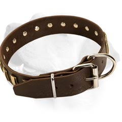 Designer Leather Collar For Labrador