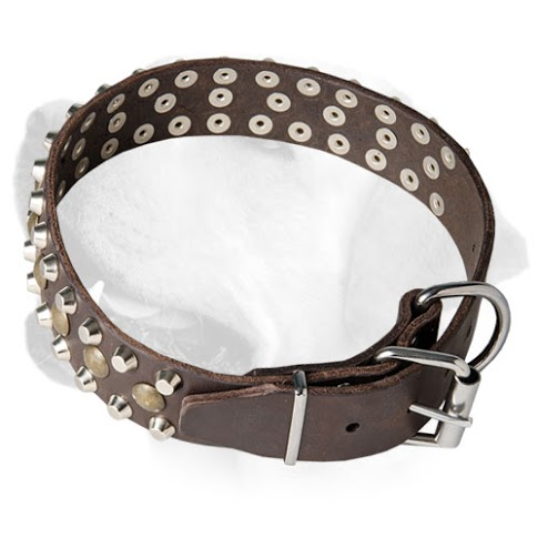 Studded Leather Dog Collar for     Labrador