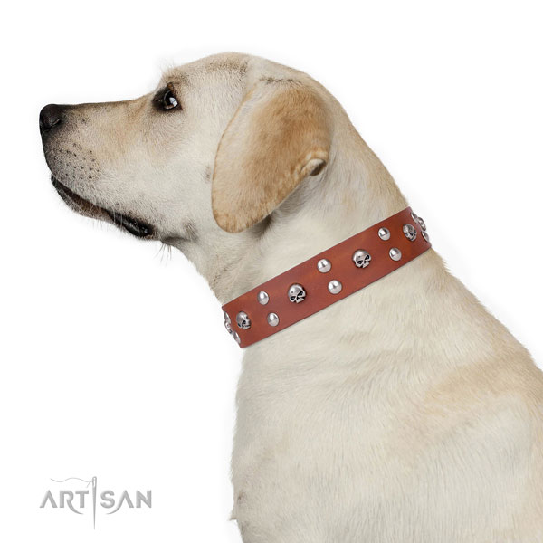 Walking decorated dog collar of quality leather