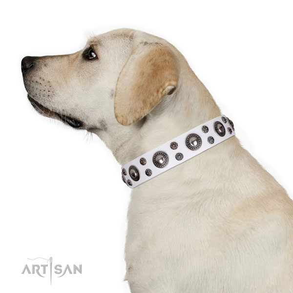 Stylish walking decorated dog collar of top notch natural leather