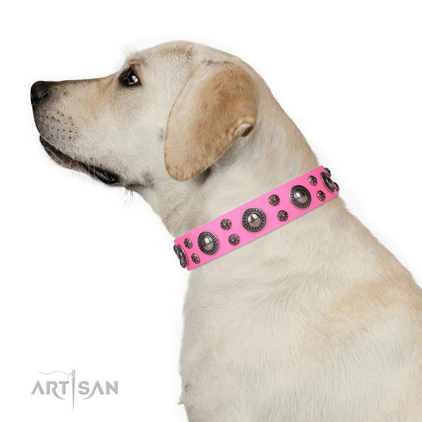 Fancy walking decorated dog collar of fine quality leather