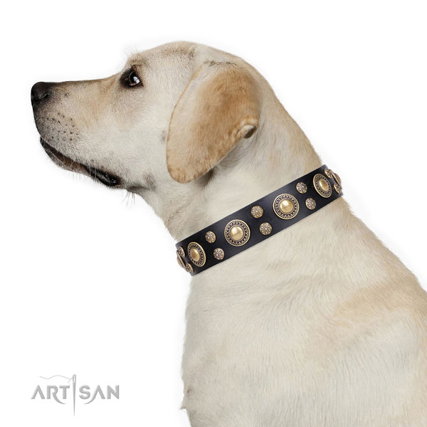 Comfy wearing adorned dog collar of quality genuine leather