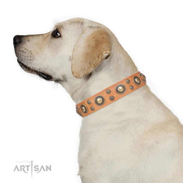 Comfy wearing studded dog collar of quality material