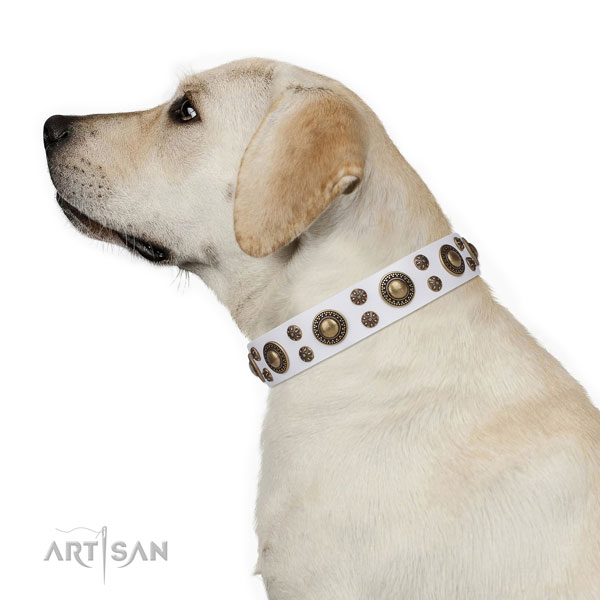 Walking adorned dog collar of reliable material