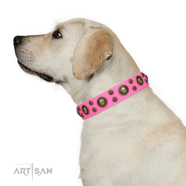 Walking embellished dog collar of durable material