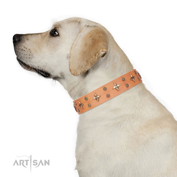 Daily use adorned dog collar of top notch material