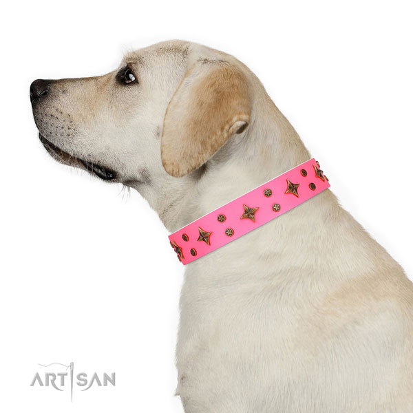 Daily use embellished dog collar of finest quality material