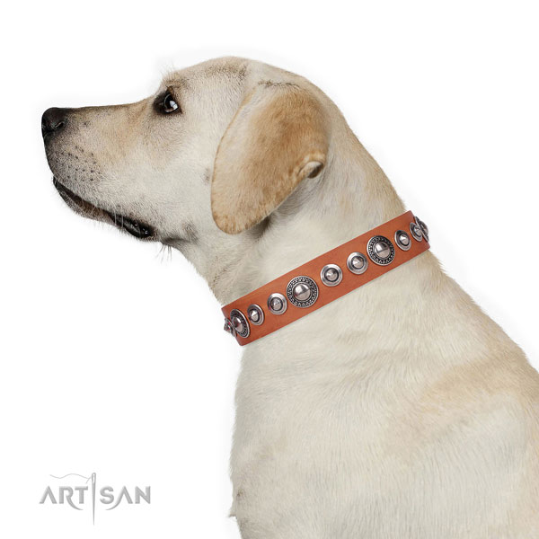 Stylish adorned leather dog collar for walking