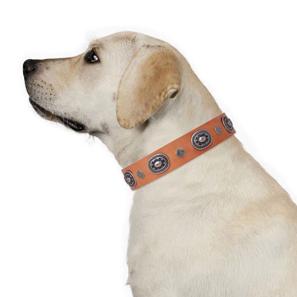 Leather dog collar with strong buckle and D-ring for handy use