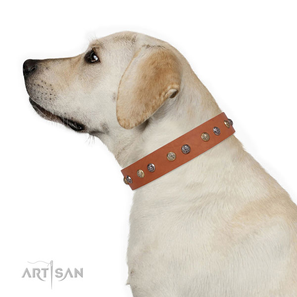 Genuine leather dog collar with strong buckle and D-ring for everyday walking