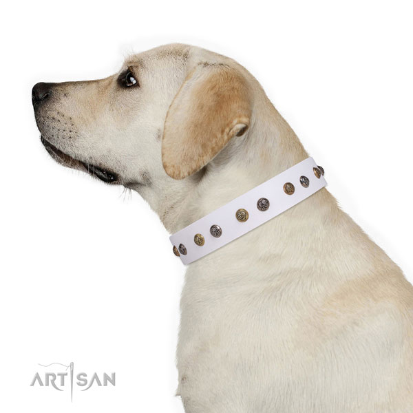 Comfy wearing adorned dog collar made of strong leather