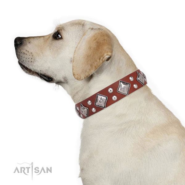 Walking embellished dog collar made of best quality natural leather