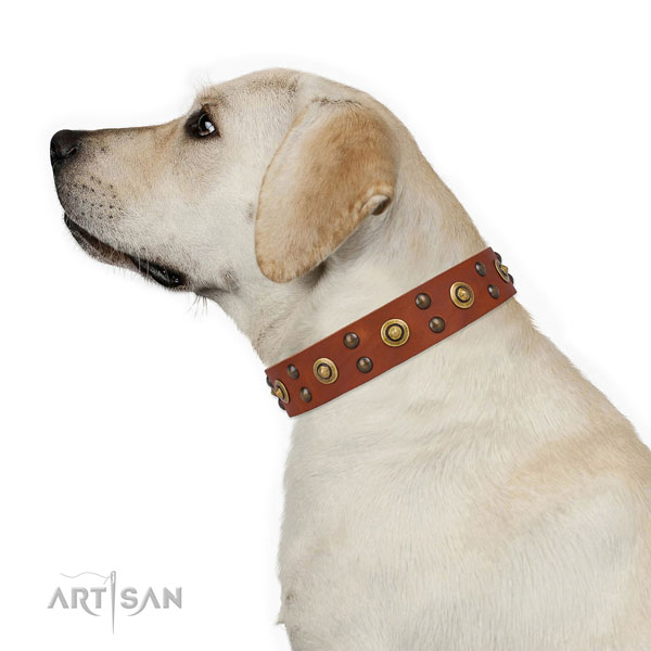 Handy use dog collar with significant adornments