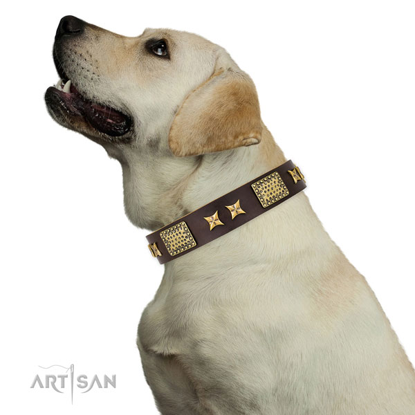 Walking dog collar with trendy embellishments