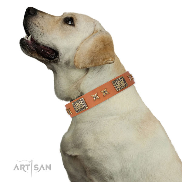 Handy use dog collar with exceptional embellishments
