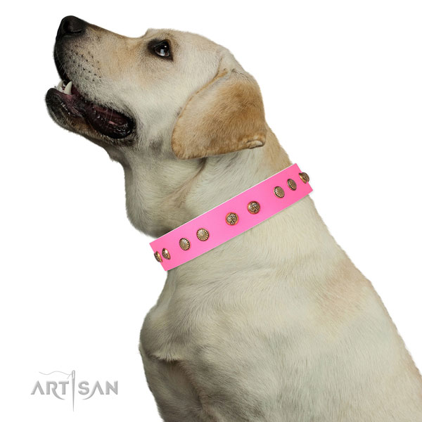 Designer decorations on basic training full grain natural leather dog collar