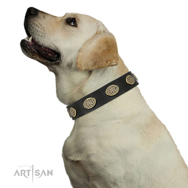 Awesome adornments on daily walking full grain leather dog collar