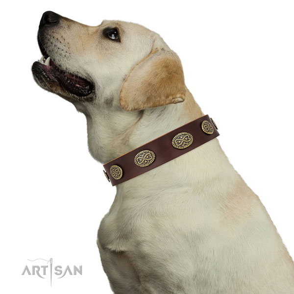 Top notch adornments on stylish walking full grain natural leather dog collar