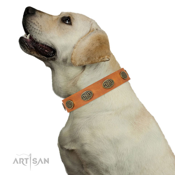 Extraordinary studs on fancy walking full grain natural leather dog collar