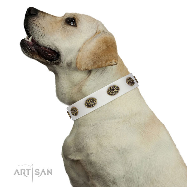 Designer studs on everyday use full grain genuine leather dog collar