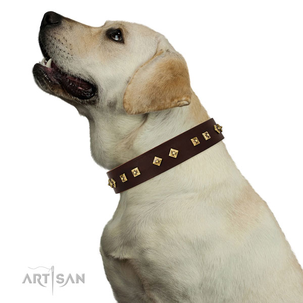 Stylish embellishments on daily walking full grain leather dog collar