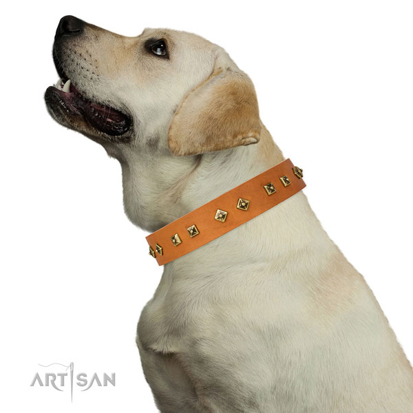 Stunning adornments on fancy walking dog collar