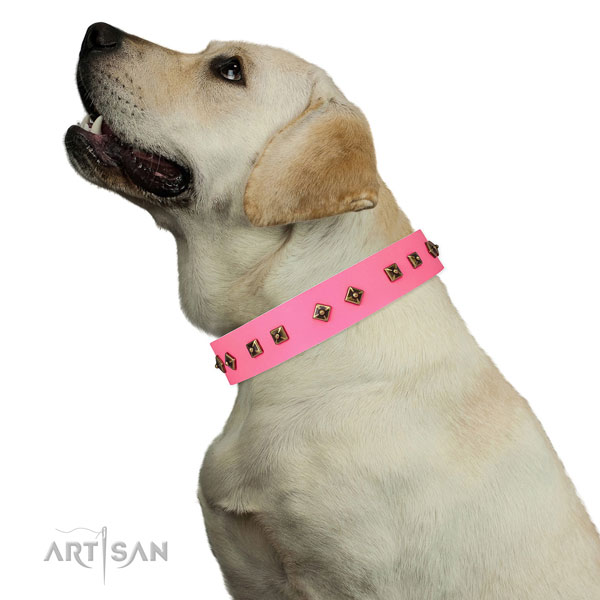 Stylish studs on everyday use dog collar