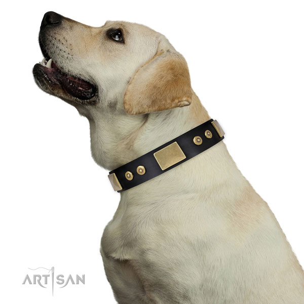 High quality daily use dog collar of genuine leather
