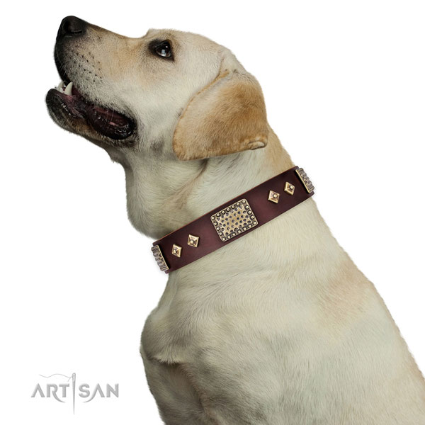 Top notch daily use dog collar of genuine leather