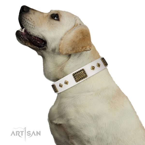 Everyday walking dog collar of natural leather with stunning adornments