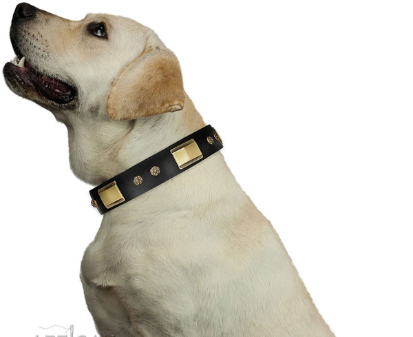 Fancy walking dog collar of leather with remarkable adornments