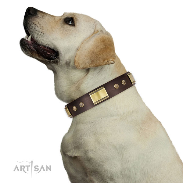 Handy use dog collar of genuine leather with top notch studs
