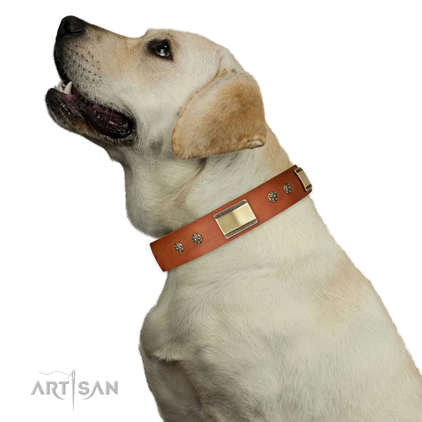 Basic training dog collar of natural leather with incredible decorations