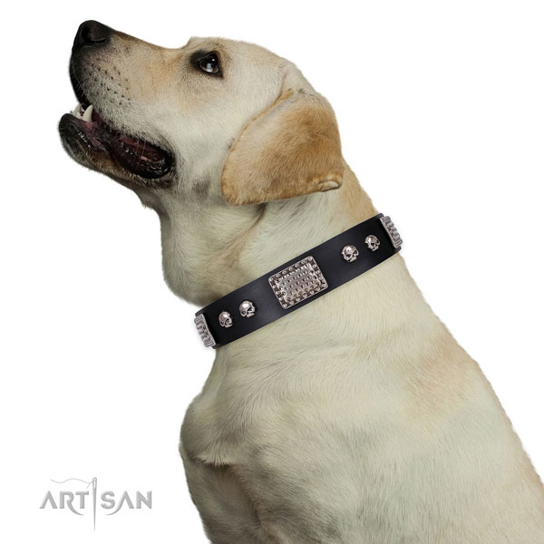 Fine quality leather collar for your lovely doggie