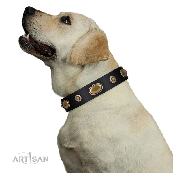 Handy use dog collar of natural leather with stylish studs