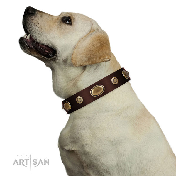 Easy wearing dog collar of natural leather with amazing adornments