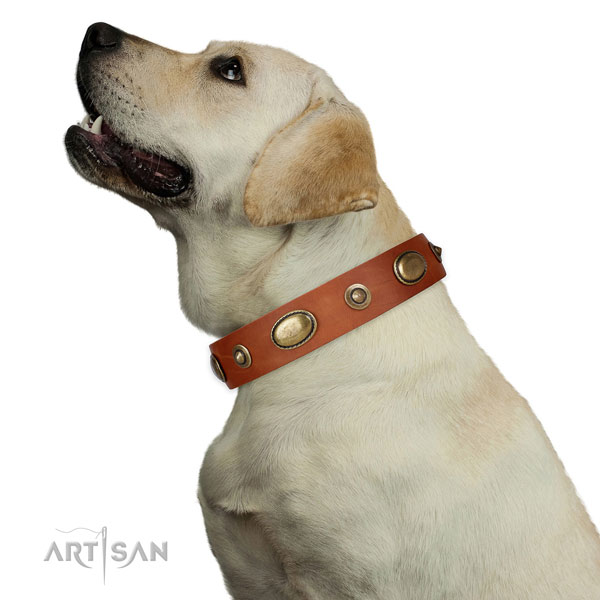 Fancy walking dog collar of genuine leather with trendy studs